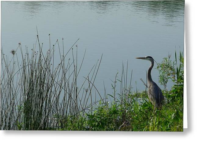 Blue Heron Greeting Card by Anna Villarreal Garbis