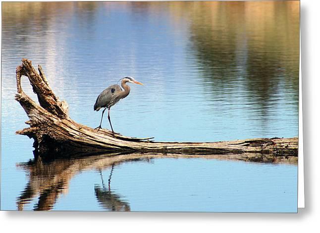 Blue Heron At Lake Shastina Greeting Card