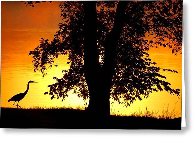 Blue Heron At Sunrise Greeting Card by Sumoflam Photography