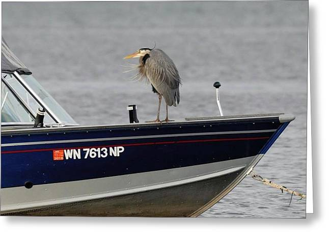 Blue Heron Boat Ride Greeting Card