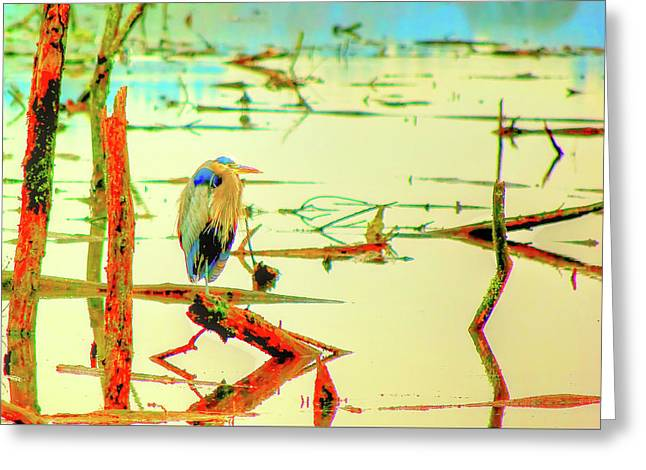 Greeting Card featuring the photograph Blue Heron by Dale Stillman