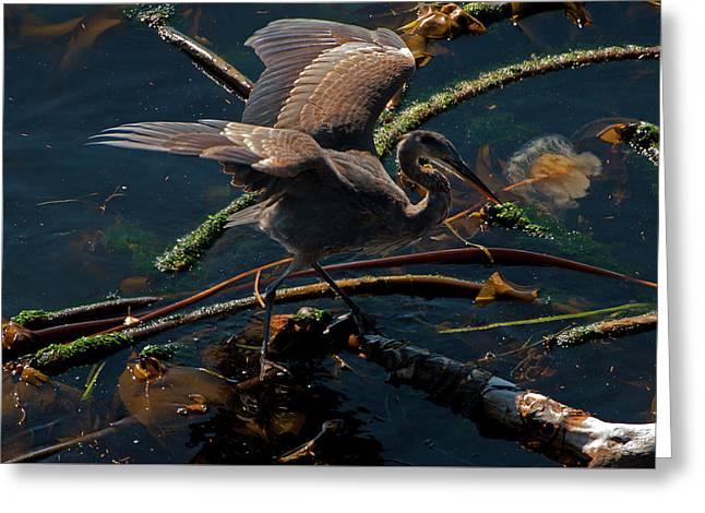Blue Heron Fishing Greeting Card