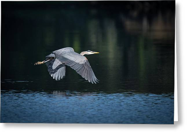 Blue Heron Flying Greeting Card