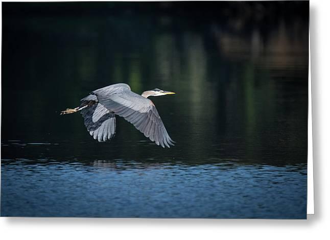 Blue Heron Flying Greeting Card