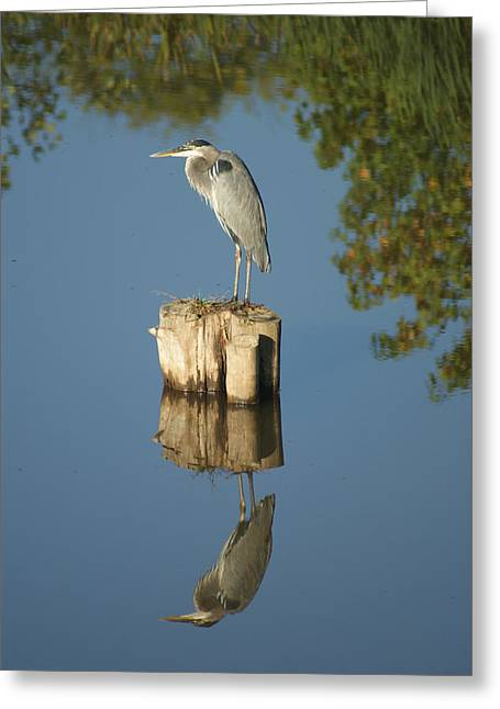 Greeting Card featuring the photograph Blue Heron by Heidi Poulin