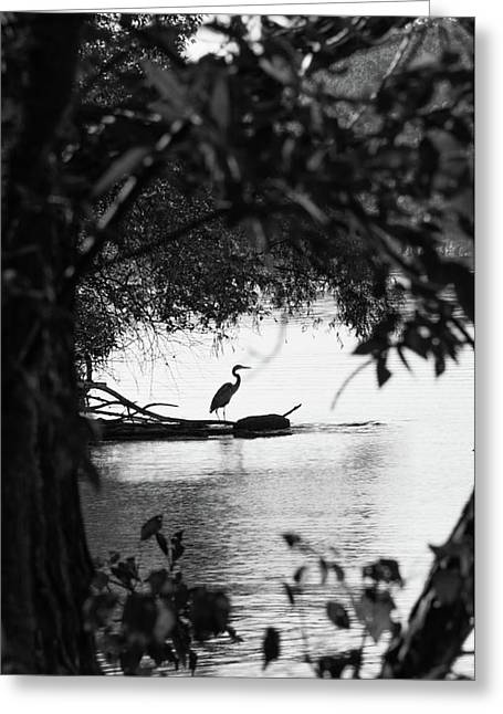 Blue Heron In Black And White. Greeting Card