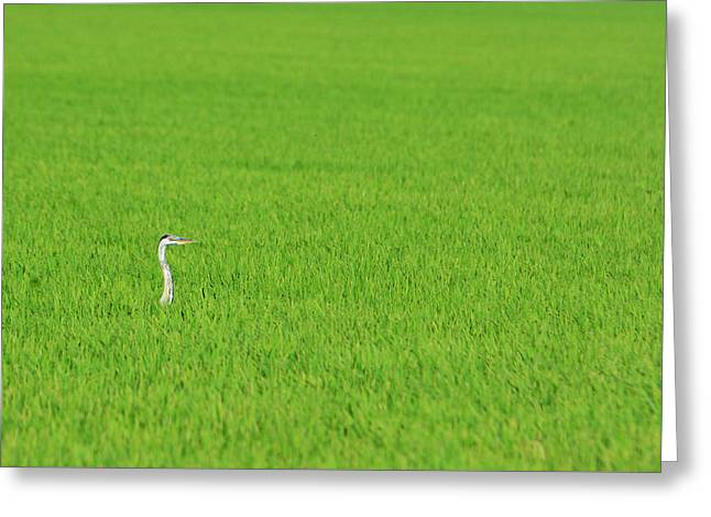 Blue Heron In Field Greeting Card by Josephine Buschman