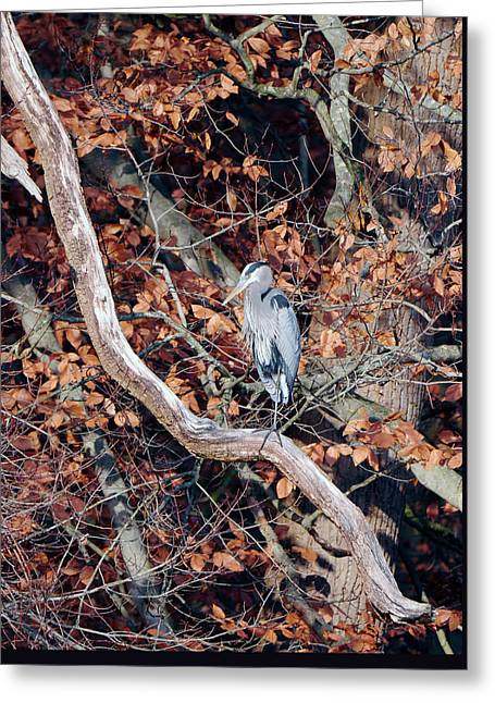 Blue Heron In Tree Greeting Card