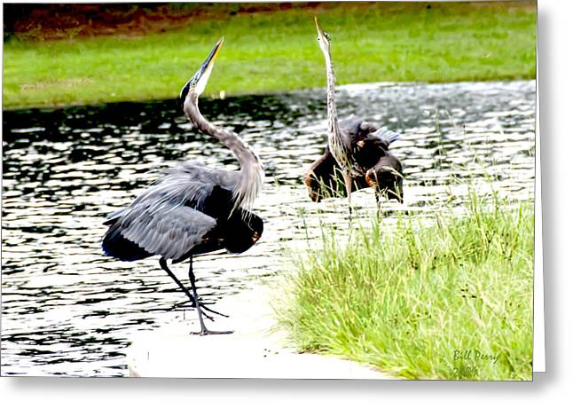 Blue Heron Mating Dance Greeting Card by Bill Perry