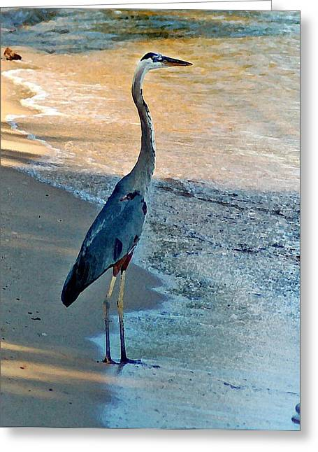 Blue Heron On The Beach Close Up Greeting Card