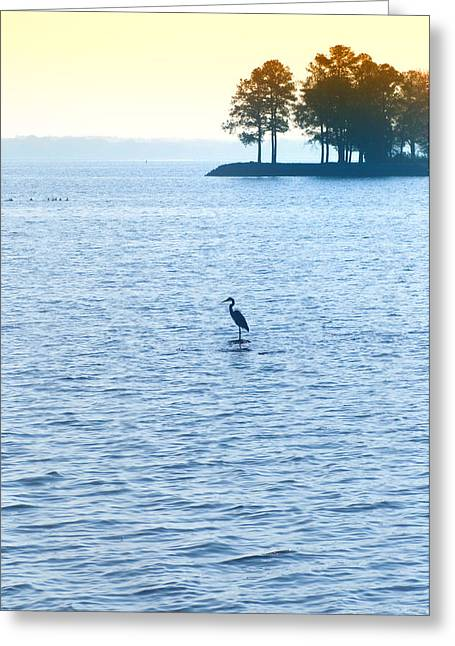 Blue Heron On The Chesapeake Greeting Card by Bill Cannon