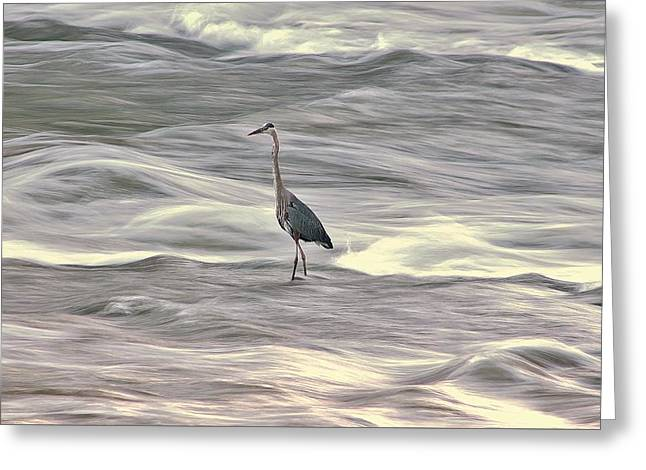 Blue Heron On The Grand River Greeting Card