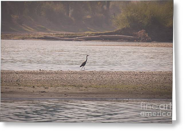 Blue Heron On The Yellowstone Greeting Card by Shevin Childers