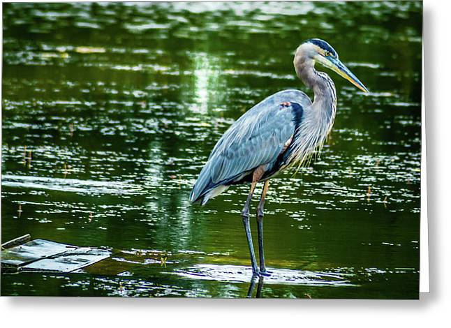 Blue Heron Greeting Card by Optical Playground By MP Ray