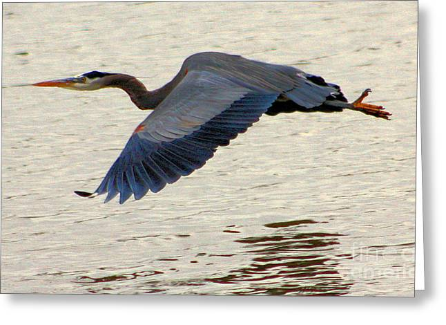 Blue Heron Over Water Greeting Card