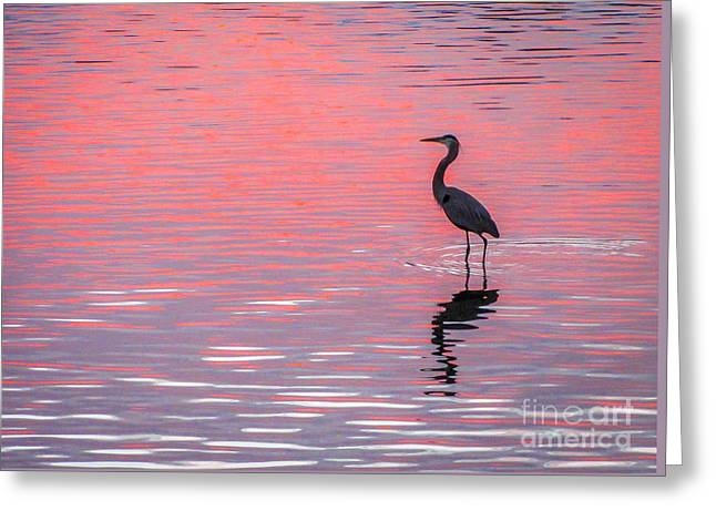 Blue Heron - Pink Water Greeting Card