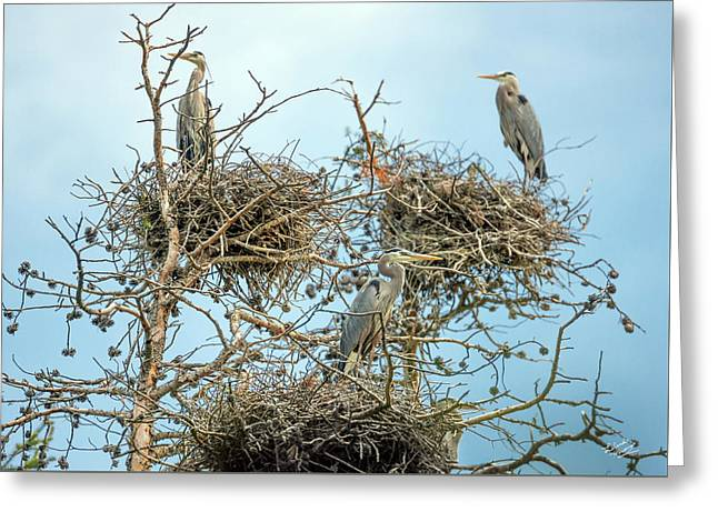 Blue Heron Rookery 2 Greeting Card by Leland D Howard