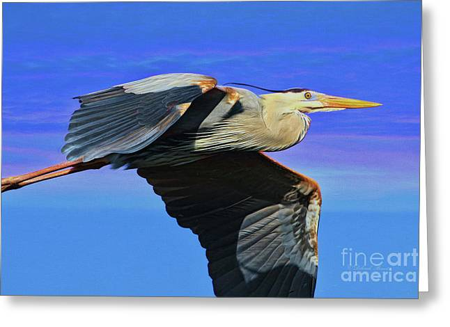 Greeting Card featuring the painting Blue Heron Series Fly by Deborah Benoit
