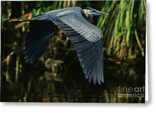 Greeting Card featuring the photograph Blue Heron Series The Pond by Deborah Benoit