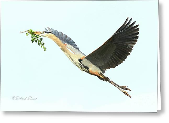 Greeting Card featuring the photograph Blue Heron Series Twig 2017 by Deborah Benoit