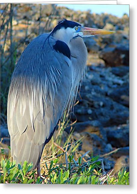 Blue Heron Visions Greeting Card by Nada Frazier