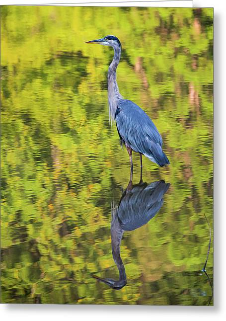 Blue Heron Wading Greeting Card