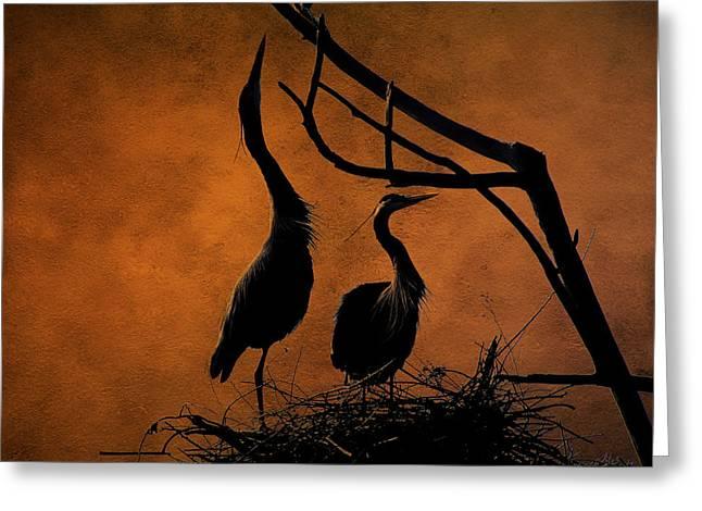 Blue Herons Nesting At Twilight Greeting Card