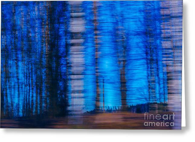 Blue Hour In Birch Forest Greeting Card