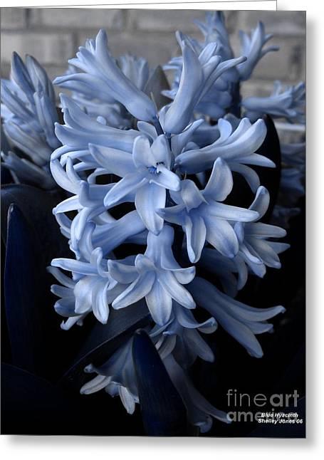 Blue Hyacinth Greeting Card