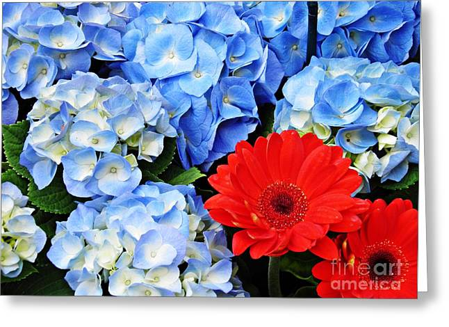 Blue Hydrangea And Red Gerbers Greeting Card