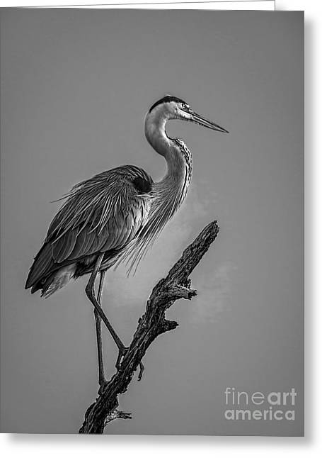 Blue In Black-bw Greeting Card by Marvin Spates