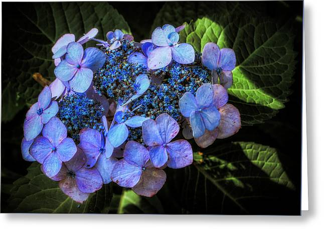 Blue In Nature Greeting Card