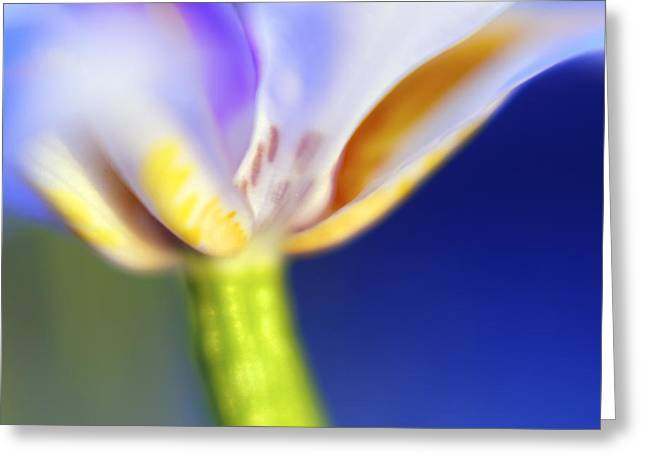 Blue Iris 2 Greeting Card by DRK Studios