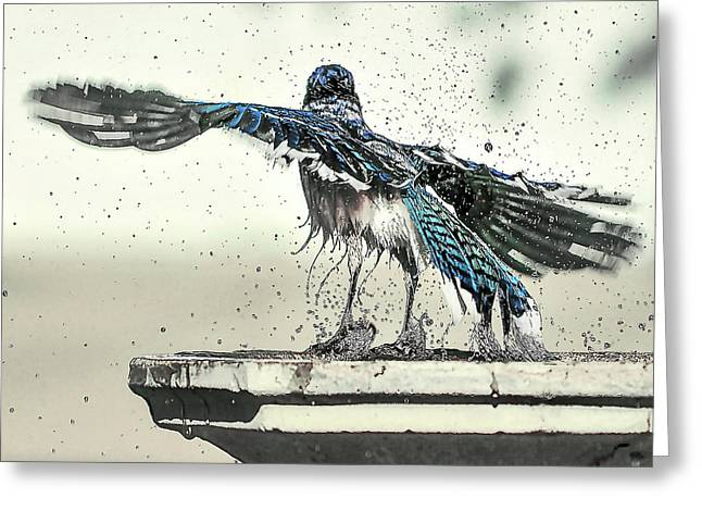 Blue Jay Bath Time Greeting Card