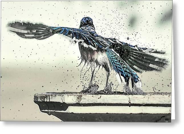 Blue Jay Bath Time Greeting Card