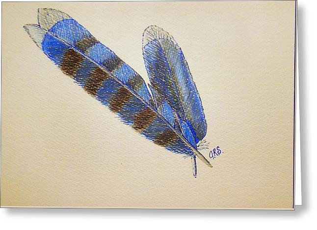 Blue Jay Feathers Greeting Card by J R Seymour