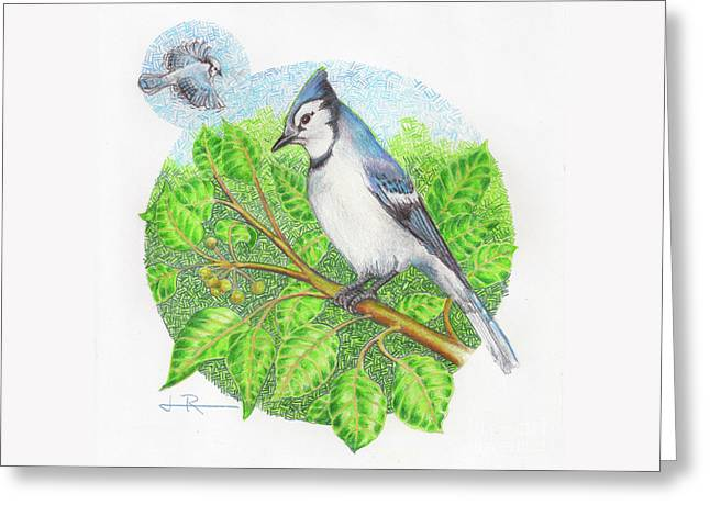 Blue Jay In A Pear Tree Greeting Card