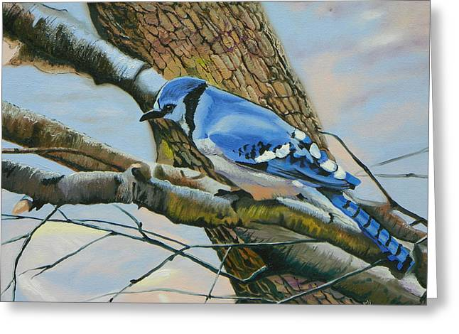 Blue Jay Greeting Card by Kenneth Young