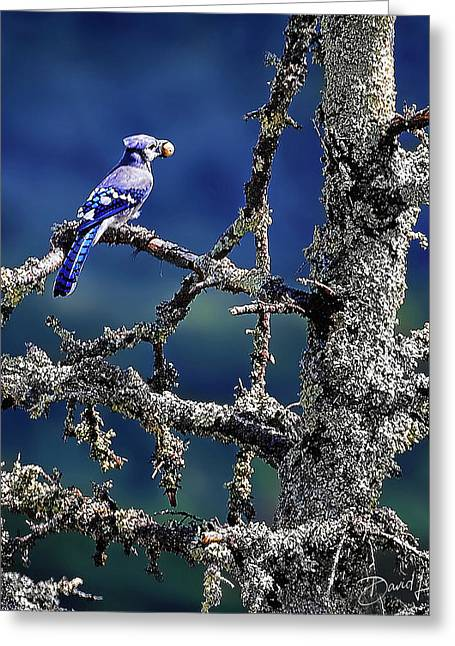Blue Jay Mountain Greeting Card