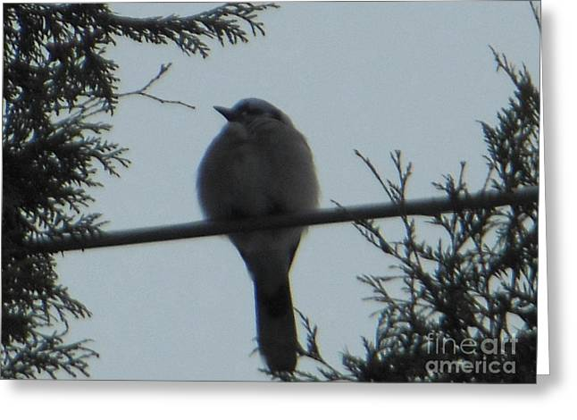 Blue Jay On Wire Greeting Card