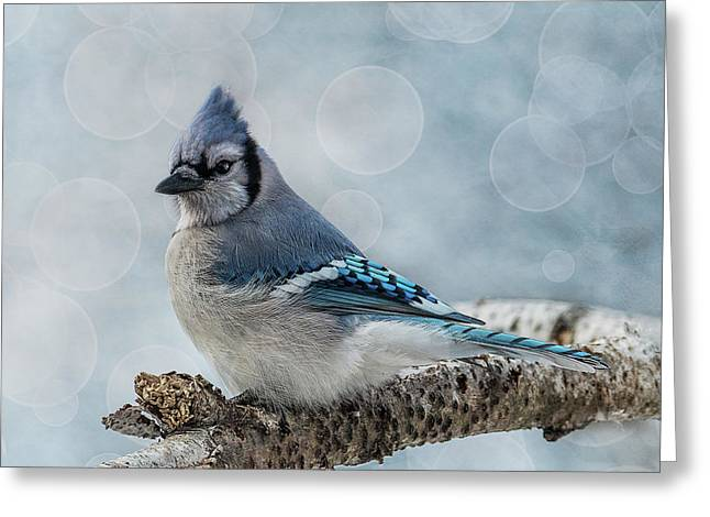 Blue Jay Perch Greeting Card