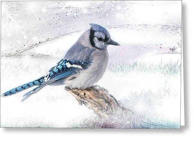 Blue Jay Snow Greeting Card