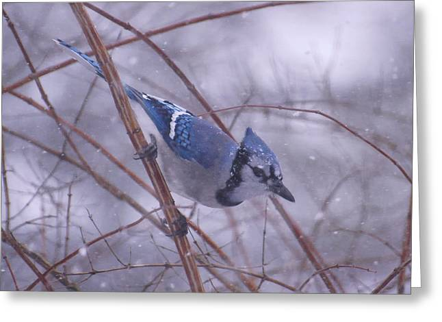 Blue Jay Way Greeting Card