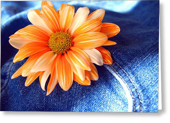 Blue Jeans And Daisies Greeting Card