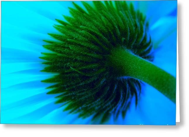 Blue Joy Greeting Card