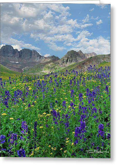 Blue Larkspur Greeting Card by Tim Fitzharris