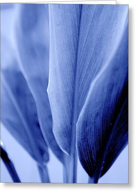 Blue Leaf Bases Greeting Card by Sean Davey