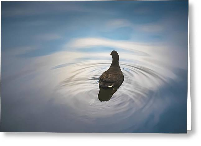 Blue Light Moorhen Greeting Card