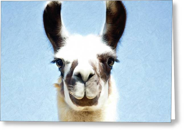 Greeting Card featuring the photograph Blue Llama by Sue Collura