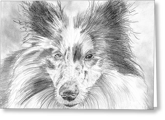 Blue Merle Sheltie Graphite Drawing Greeting Card